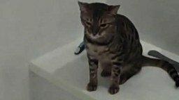 Смотреть Кошка наслаждается водой