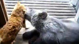Кот и медвежонок смотреть видео прикол - 2:16