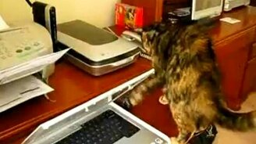 Смотреть Нервный кот