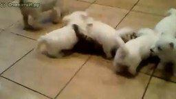 Смотреть Атака щенят