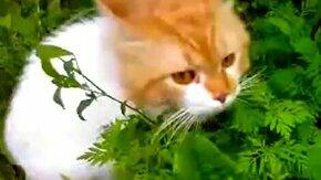 Смотреть Опасная трава для кота