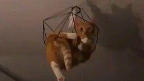 Люстра - ловушка для кота смотреть видео прикол - 0:17