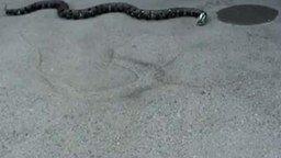 Змея-робот смотреть видео прикол - 0:20