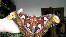 Бабочка-гигант смотреть видео прикол - 0:39