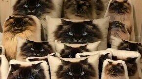 Найди кошку среди подушек