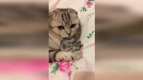 Смешное и трогательное с кошками смотреть видео прикол - 10:52