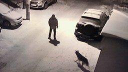 Человек атакует собаку смотреть видео прикол - 0:37
