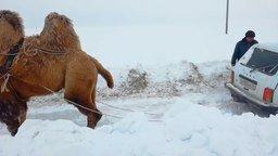 """Верблюд вытягивает """"Ниву"""" смотреть видео прикол - 0:46"""