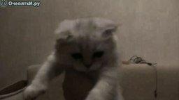 Котёнок-футболист смотреть видео прикол - 1:14