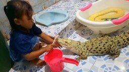 Девочка чистит зубы крокодилу смотреть видео прикол - 0:30