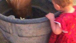 Малышка приветствует лошадей смотреть видео прикол - 0:45