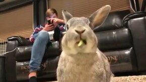 Как ест кролик смотреть видео прикол - 0:11