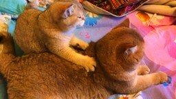 Массаж спины по-кошачьи смотреть видео прикол - 0:33