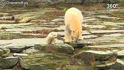 Первая прогулка медвежонка смотреть видео прикол - 1:47