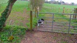 Собака с палкой против ограды смотреть видео прикол - 1:16