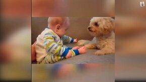 Самые милые собаки и дети смотреть видео прикол - 5:08