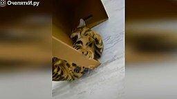 Весёлые коты и трогательные кошки смотреть видео прикол - 11:03