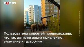Слоны в Якутске смотреть видео прикол - 0:40