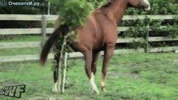 Лошадь зад чешет смотреть видео прикол - 0:51