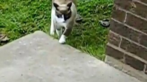 Зомбированная кошка смотреть видео прикол - 0:49
