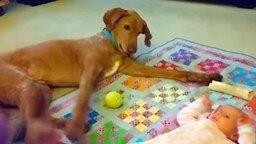 Игры счастливых детей и собак смотреть видео прикол - 10:04