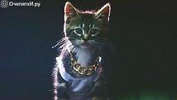 Котики и кошечки в весёлых роликах смотреть видео прикол - 10:10