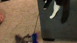 Кошки занимают себя сами смотреть видео прикол - 0:17