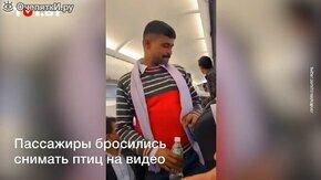 Внезапные гости в салоне самолёта смотреть видео прикол - 0:38