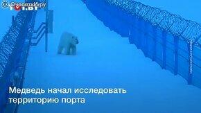 Прогнали медведя с помощью теплохода смотреть видео прикол - 1:26