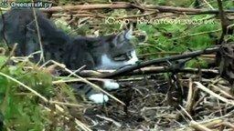 Смотреть Лиса и кошка