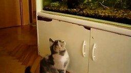 Кошка охотница смотреть видео прикол - 0:35