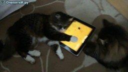 Гламурные кошки смотреть видео прикол - 1:39