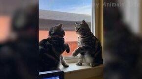 Весёлые и задорные коты и собаки смотреть видео - 12:48