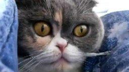 Кот-совёнок смотреть видео прикол - 0:10