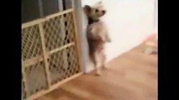 Смотреть Пёсика наказали