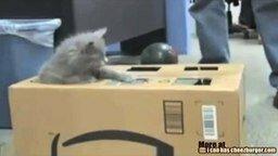 Котёнок на рыбалке смотреть видео прикол - 0:37