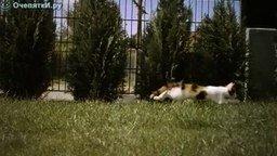 Котёнок в замедлении смотреть видео прикол - 2:00