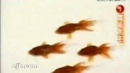 Смотреть Тренируют рыбок