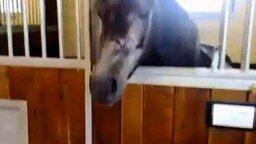 Смотреть Лошадь заигрывает