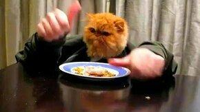 Цивилизованная кошка смотреть видео прикол - 1:03