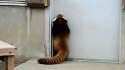 Смотреть Взламывают дверь