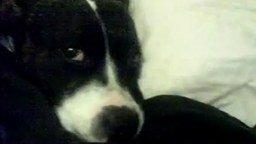 Пёс с похмелья смотреть видео прикол - 2:13