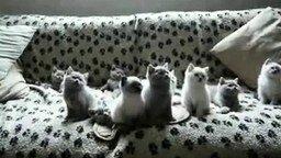 Котята меломаны смотреть видео прикол - 0:36