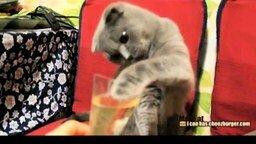 Смотреть Так кот пьёт шампанское