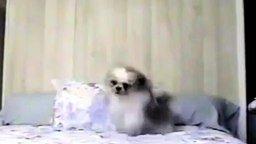 Собака-страус смотреть видео прикол - 0:36