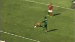 Смотреть Пёс насладился матчем