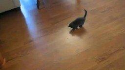 Котёнок и пылесос смотреть видео прикол - 0:09