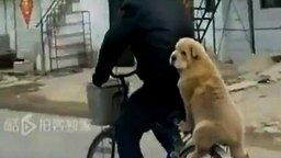 Смотреть Собака на велосипеде