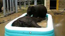 Смотреть Купание слонят