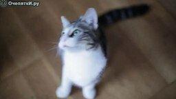 Смотреть Кошки-зомби